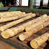 Exploring the Benefits of Using Southern Yellow Pine As A Building Product